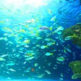 雨の日 どこへ行く 東京の主な水族館を比較してみた お得なのはどこか